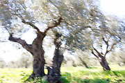Motion blurred trees