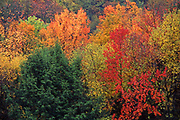 Autumn foliage, Allegheny National Forest, Pennsylvania