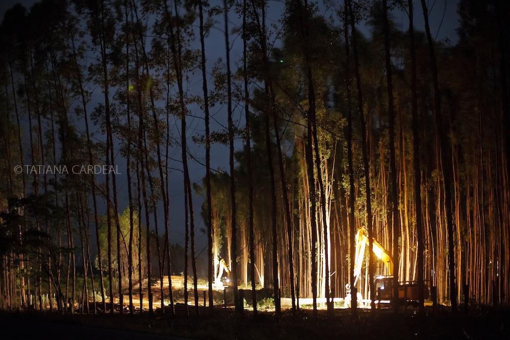 Cut of Eucalyptus in Teixeira de Freitas city, Bahia State - Brazil. Machines operate 24 hours a day.<br /> <br /> Corte de eucaliptos em Teixeira de Freitas (BA). Máquinas operam 24 horas por dia.