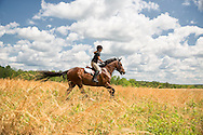 Horse with rider galloping through a tall grass field