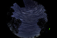 Star Trails looking Up (23:30-00:29). Composite of images  taken with a Nikon D850 camera and 8-15 mm fisheye lens (ISO 800, 10 mm, f/5.6, 30 sec)