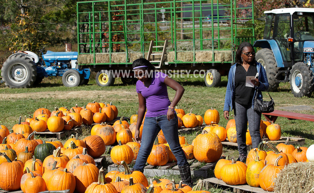 Chester, New York - People look at pumpkins for sale during the celebration of 100 years in business at Soons Orchards and Farm Market  on Oct. 11, 2010. ©Tom Bushey / The Image Works