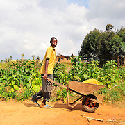 Young boys haul jerry cans of water in wheelbarrows through the rural streets of Rulindo District, Rwanda.