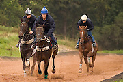 Horse train on the gallops at James Ewart's racing stables near Langholm, Scotland.