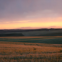 Sunset Over the Rye Fields<br />
