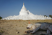 A dog rests in front of the temple of Hsinbyume, Myanmar.