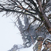 Jess McMillan skis a line in the backcountry of the Tetons.