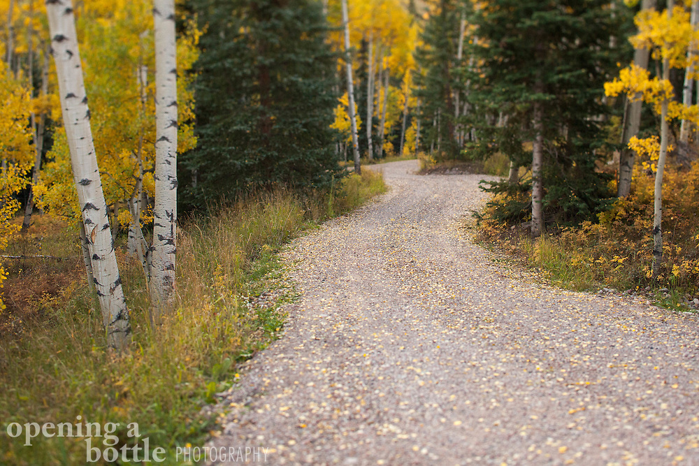 A dirt road covered in aspen leaves winds through the forest near Ashcroft south of Aspen, Colorado.