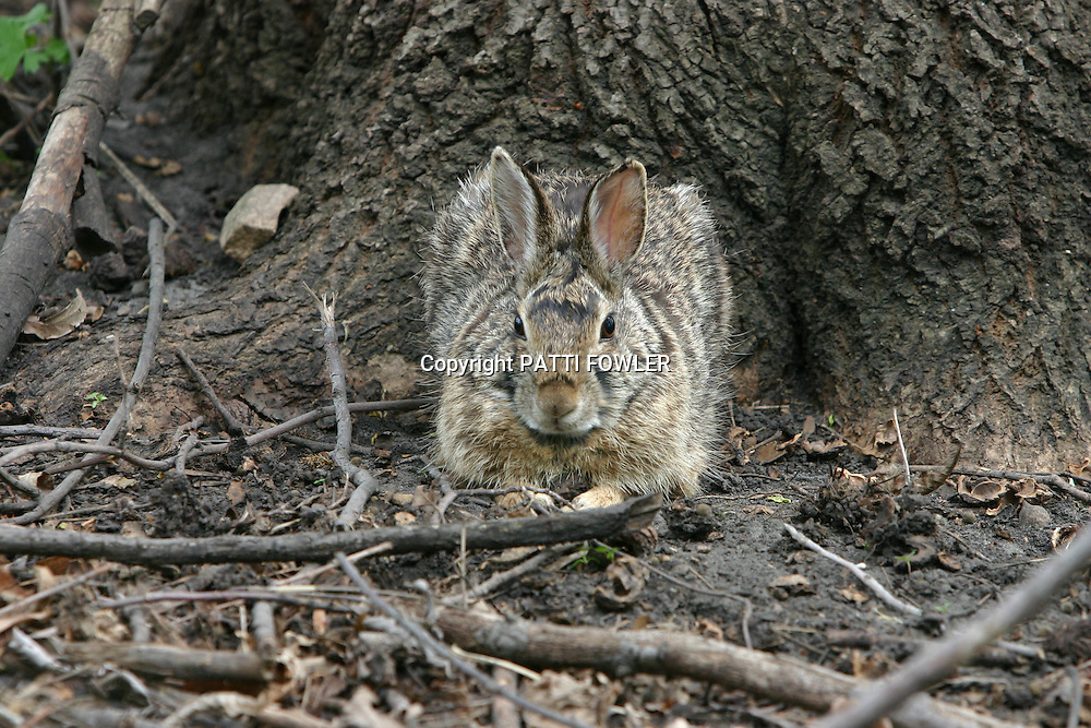 rabbit hiding in forest