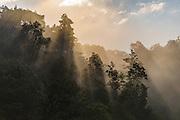 El Triunfo Biosphere Reserve<br /> Chiapas, Mexico