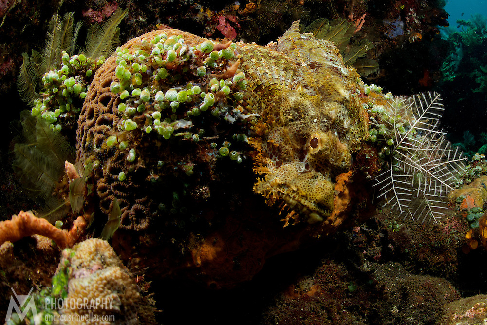 Dive Spot: Black Forest Underwater images shot during a stay at Alam Batu Beach Bungalow Resort in Bali, Indonesia (http://www.alam-batu.com/).<br />