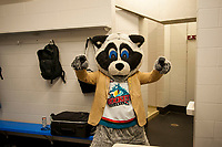 KELOWNA, CANADA - MARCH 10:  Rocky Raccoon, the mascot of the Kelowna Rockets hams it up for the camera against the Kamloops Blazers on March 10, 2018 at Prospera Place in Kelowna, British Columbia, Canada.  (Photo by Marissa Baecker/Shoot the Breeze)  *** Local Caption ***