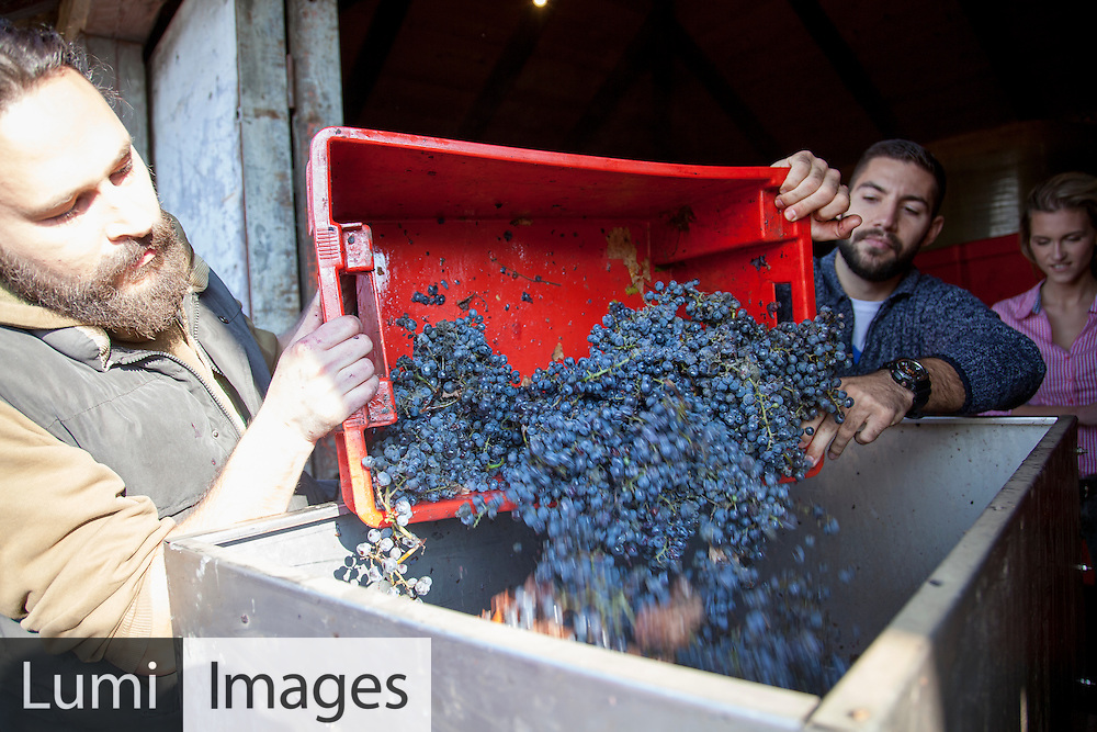 Wine, Harvesting, Men, Vineyard, Crate, Cooperation, Unloading,