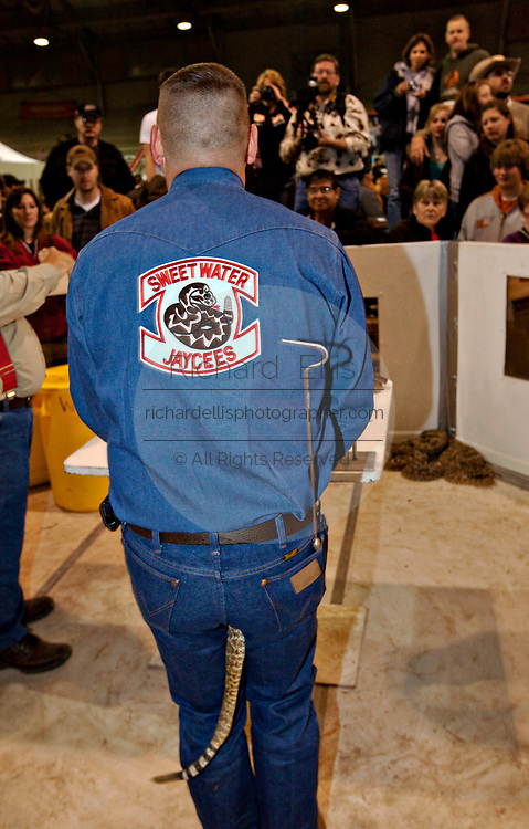 The tail of a western diamondback rattlesnake stick out from between the legs of a Jaycee volunteer snake handler as he milks the snake during the 51st Annual Sweetwater Texas Rattlesnake Round-Up March 14, 2009 in Sweetwater, Texas. During the three-day event approximately 240,000 pounds of rattlesnake will be collected, milked and served to support charity.