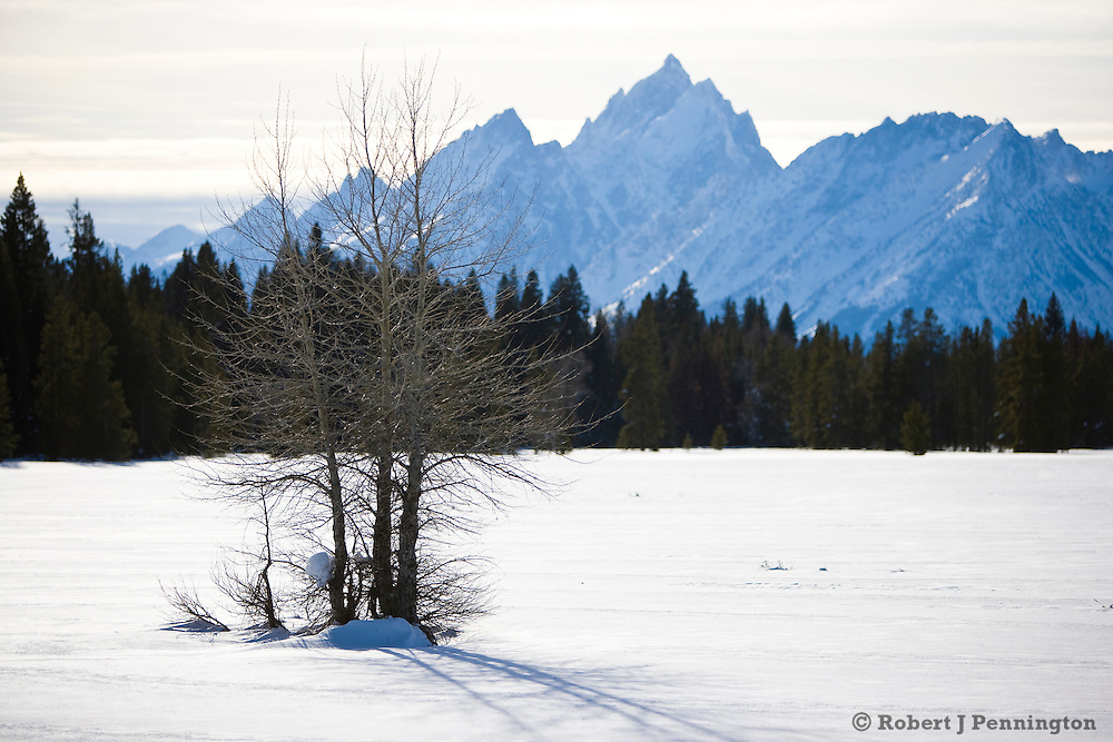 A winter field and dormant trees wait for spring near the Teton Range in Wyoming.