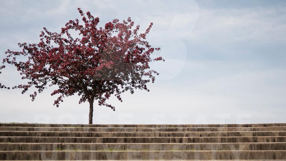 Spring, Campus scenes, Patrick Sweeney Photo