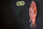 Fresh red scorpionfish on the table with parsley leaves and lemon slices, high angle view shot.