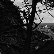 Point Lobos in Black and White. California.
