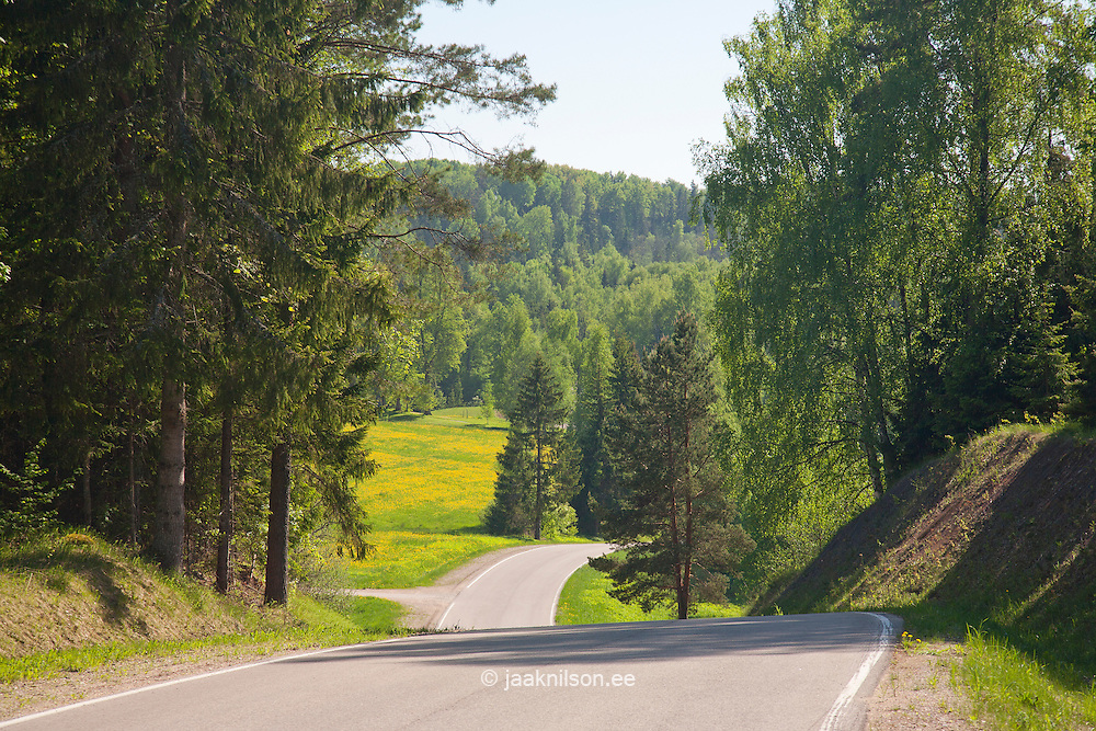 Winding Hilly Road near Otepää in Valga County, Estonia