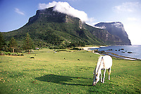 A lucky horse grazes under the spectacular Mt. Gower, Lord Howe Island, Australia.  Lord Howe Island is home to the world's southern-most coral reef.  Ocean currents flow southward from the Great Barrier Reef, bringing coral larvae, which settle and thrive here.  The small island is home, at least for part of the year, for thousands of seabirds, including boobies, frigates, and tropic birds.  It is truly a stunningly beautiful place.
