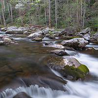 Little River cascades with a dogwood in bloom. Tremont District, Great Smoky Mountain National Park.