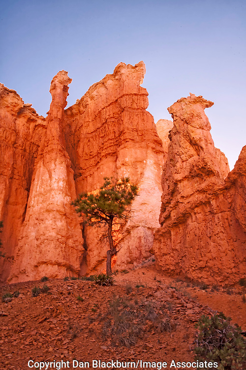 Sunrise on Hoodoos Queens Garden Trail Bryce Canyon National Park