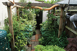 Pergola over a side passgae with hostas, ferns and bamboos in pots.