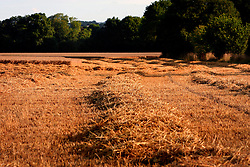 UK ENGLAND NORFOLK BINTREE 8AUG06 - Dry and harvested field of wheat in north Norfolk...jre/Photo by Jiri Rezac..© Jiri Rezac 2006..Contact: +44 (0) 7050 110 417.Mobile:  +44 (0) 7801 337 683.Office:  +44 (0) 20 8968 9635..Email:   jiri@jirirezac.com.Web:    www.jirirezac.com..© All images Jiri Rezac 2006 - All rights reserved.