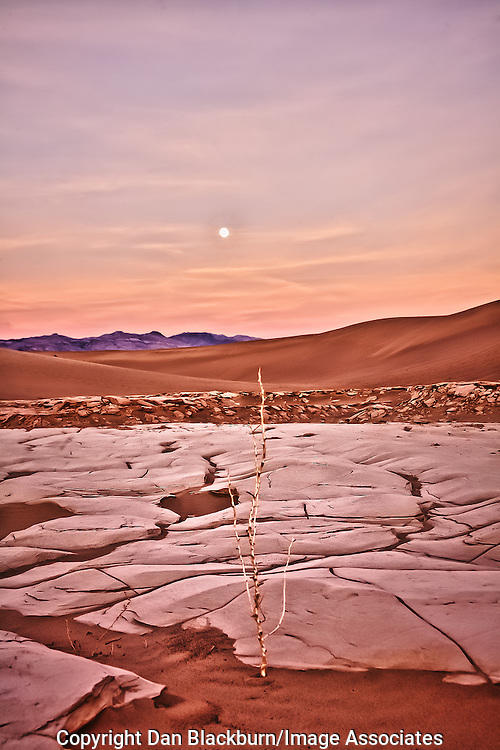 A lone dry twig rises from the sand as the full moon sets and the sun rises over the Mesquite Dunes in Death Valley.