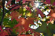Fall in Ohio 2013