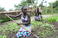 Members of the Tuktiop Farmer's Group prepare the soil in their communal garden in Malek Village, South Sudan. Members have learned how to build and maintain a tree seedling nursery as part of the Catholic Relief Services (CRS) led Jonglei Food Security Program, JFSP, in Jonglei, South Sudan. The JFSP aims to address the root causes of hunger in Jonglei State with cross-cutting programming that incorporates disaster risk reduction into the agriculture, livelihoods and income generation interventions. The JFSP targets highly vulnerable families, organizing them into farmer producer groups to disseminate information about new and sustainable technologies for increasing crop production and improving livelihoods. <br />
