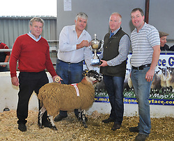 Tom Staunton Tourmakeady won Best in Show with his pen of Mule Ewe lambs at this years Mayo Mule and Greyface Show & Sale.<br /> From left TJ Gormley Sponsor (Cormac Sheep Tagging), Tom Staunton, Kieran McGrath, Judge and Oliver Cawley Mayo Mule & Greyface Group.<br /> Pic Conor McKeown