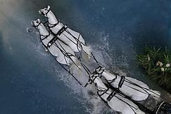 Dobrovitz Jozsef<br /> Illem, Incitato-I-33 Janko, Maestoso X-30 Magus, Eminenz 22<br /> CAI-W Geneve 2008<br /> Photo © Hippo Foto