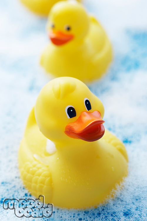Row of Rubber Ducks in Bubble Bath