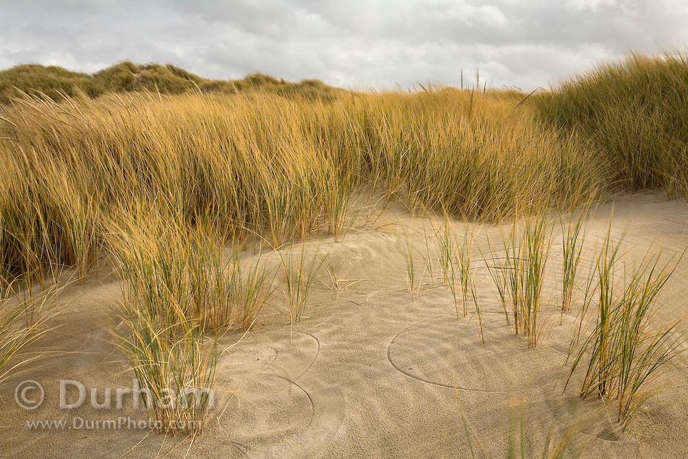 Patterns in beach grass created by wind. Oregon coast.