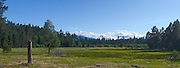 Cascade Mountains Meadow panoramic