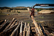 A crane picks up logs to feed into the de-barker at the Sierra Pacific lumber mill in Chinese Camp, Calif., July 25, 2012..CREDIT: Max Whittaker/Prime for The Wall Street Journal.TIMBER