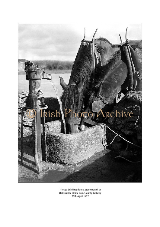 Horses drinking from a stone trough at Ballinasloe Horse Fair, County Galway.<br />