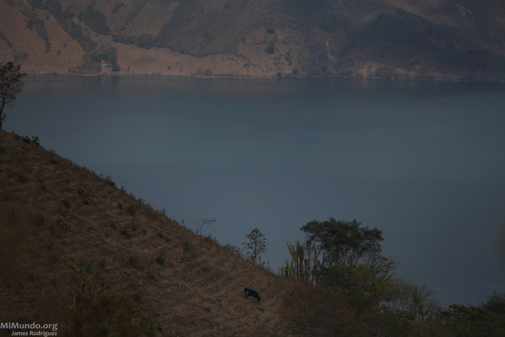 A cow feeds near the Laguna de Ayarza, a volcanic lake that sits 2.5 Kilometers downstream from Tahoe Resources' El Escobal, or San Rafael, silver mine. According to the local Committee in the Defense of Life, the lake runs the risk of contamination due to the company's industrial mining activities in San Rafael Las Flores. The San Rafael Mine, 60% owned by US-based Tahoe Resources and 40% by Canadian mining giant Goldcorp, has been operating since 2011 without having previously consulted the local residents - a violation to numerous international conventions. San Rafael Las Flores, Santa Rosa, Guatemala. March 28, 2012.