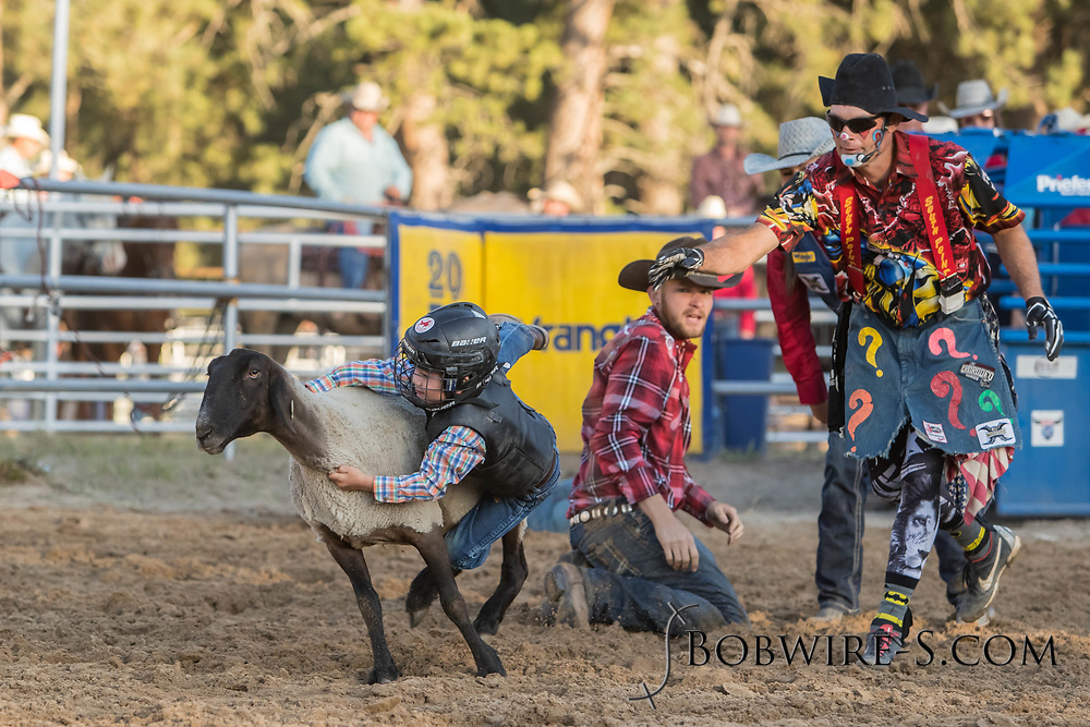 Young cowboys and cowgirls compete in the Mutton Bustin' during the second performance of the Elizabeth Stampede on Saturday, June 2, 2018.