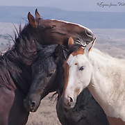 """ABIGAIL'S PORTFOLIO<br /> <br /> <br /> © Equus ferus- Wild Horse Photography 2015 <br /> <br /> **To purchase, click the little shopping cart above and it will take you to the print ordering page. All sizes and print types are available. If you don't see the size or type of print- send us an email and we will make it happen (Click the """"i"""" above to contact us)."""