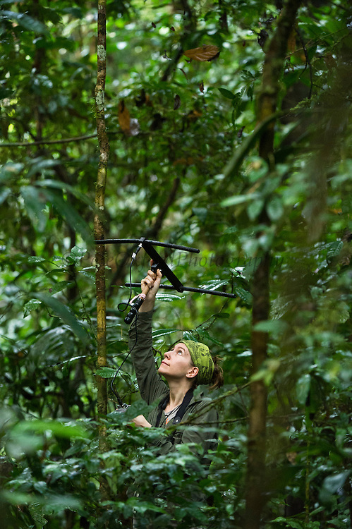 Amy Porter. Primatologist/Researcher studying Ecuatorial Saki and Red Titi Monkeys.<br /> Tiputini Biodiversity Station, Adjacent to  Yasuni National Park, Amazon Rainforest<br /> ECUADOR. South America<br /> HABITAT & RANGE: