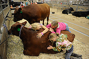 Loving on a heifer, MT State Fair