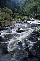 Wild, fast flowing river near St Columba Falls Forest Reserve, Tasmania