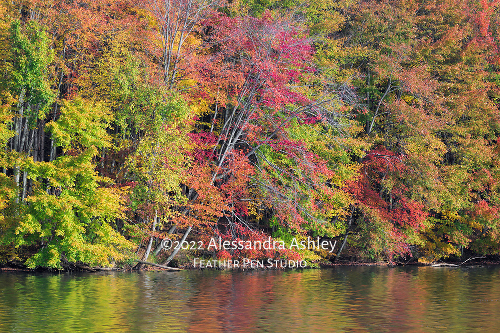Mixed autumn foliage along shoreline of Clear Fork Reservoir.