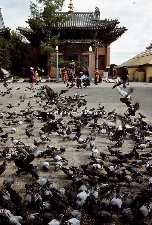 Mongolia. Ulaanbaatar. Gandan Monastery in Oulan Bator   / Monastère de Gandantegtchinlin à Oulan Bator . Mongolie. Colonie de pigeons dans la cour intérieure du monastère. Les pigeons du monastère sont régulièrement nourris par les laïcs qui leur jettent des poignées de graines. Malheureusement ces volatiles sont souvent à l'origine de dégradations des toits des bâtiments religieux qui doivent être protégés par un grillage en sous-pente, afin de les empêcher d'y faire leur nid.   / G50/120    L920803a  /  P0002565