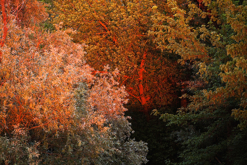 Softwood forest in late evening light, Gornje Podunavlje Special Nature Reserve, Serbia