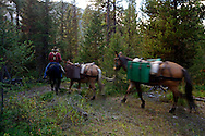 Packer Bob Pedalford leaves the Silvertip Cabin with horse and mules after packing me in for the Artist-in-Wilderness Connection Program run by the Flathead National Forest, Hockaday Museum of Art, Bob Marshall Wilderness Foundation and the Swan Ecosystem Center. Flathead National Forest, northwest Montana.