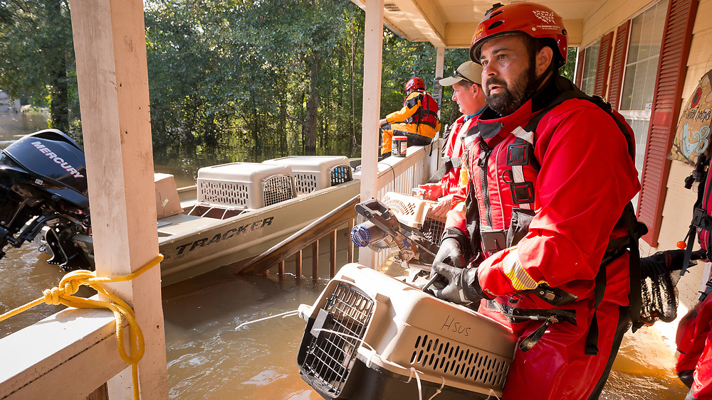 Members of the HSUS Animal Rescue Team (ART), make a successful rescue of a domesticated cat following the pet owners request that their pet be found after severe flooding from Hurricane Harvey swept in to their neighborhood. This pet will be returned to their owner. <br /> <br /> (Anthony Rathbun/Humane Society Of The United States via AP Images)