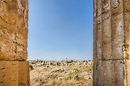 A photograph of Greek temple ruins at Selinunte, Sicily, Italy